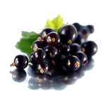 Black Currant Refined - Vegetable, Carrier, Emollients & other Oils