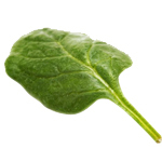 1 LT Spinach Leaf Absolute 3% in Jojoba Oil