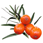 Seabuckthorn - Certified Organic CO2 Oils - ACO 10282P